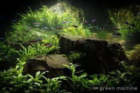 japanese aquascape huge aquascape tutorial step by step spontaneity by james findley