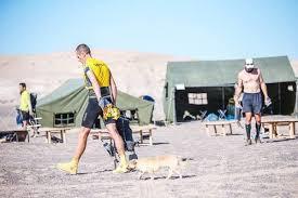 australian shepherd ultra marathon ultra runner wants to adopt stray dog who ran with him in the