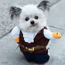 instagram famous dogs and cats in halloween costumes