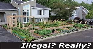 500 fine for growing vegetable garden csglobe