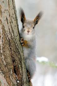 865 best squirrels images on pinterest animals wild animals and