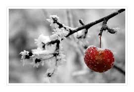 grã newald treppen rotbaeckchen winter am kaiserstuhl 2 c5c86c1c e71a 4c9a bdae 1e8c02ec18c2 jpg width 1000