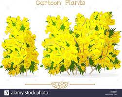 plantae series cartoon plants blooming yellow ulex stock vector