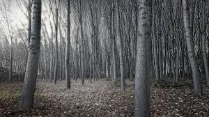 download wallpaper 2560x1440 trees autumn nature gray mac imac