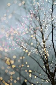 light sparkly trees loggerhead fitness