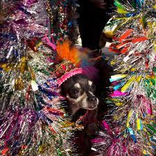 doggone cute photos of new york u0027s canine costume contest vice