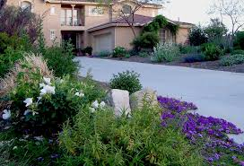 beautiful drought tolerant garden in san marcos
