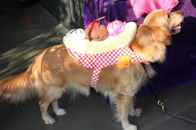 pet halloween costumes business insider
