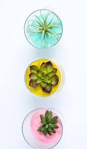 diy sand art succulent terrariums u2013 craftbnb