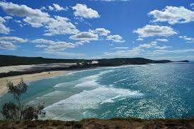native plants grow on the sand dunes at this beach stock photo fraser island wikipedia