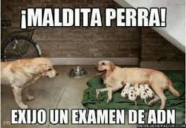 Memes In Spanish - memes en español funny memes in spanish