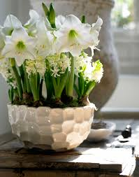 How To Arrange Indoor Plants by How To Force Bulbs For Gorgeous Indoor Bloom And Color