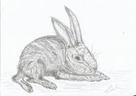 rabbit sketch creative art inspiration