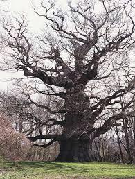 walter pall bonsai articles the tale bonsai style