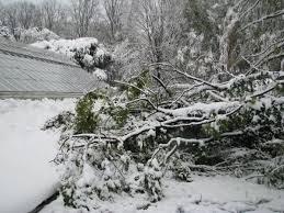 Westbury Botanical Gardens New York Parks Battered By S