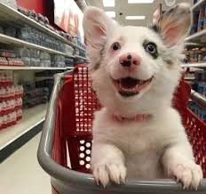 Funny Puppy Memes - put me like the cutest puppy smile
