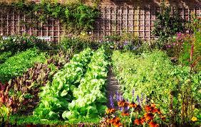 vegetable garden pictures
