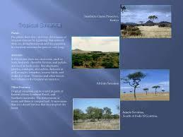 Tropical Savanna Dominant Plants - biomes presentation