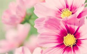 all natural flower food natural flowers wallpaper flower design