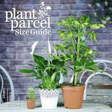 live indoor plants disco cactus mix in decorative ceramic pails house office live