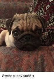 Puppy Face Meme - sweet puppy face meme on me me