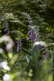 10 shade garden ideas to steal from an english woodland gardenista