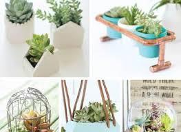 decoration best succulent pots ideas indoor succulents amazing