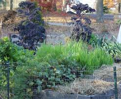 why you should mulch your garden this fall organic media network