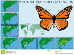 Monarch Migration Map Monarch Butterfly Migration Stock Image Image 31578681