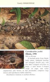 a pocket guide lizards of borneo indraneil das nhbs book shop