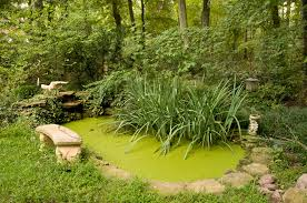 native pond plants saving nature by learning to live with it the benefits of native