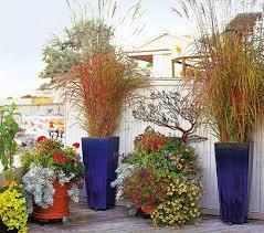gardening ornamental grass homesteaders ornamental