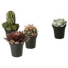 succulents u0026 cactus plants garden plants u0026 flowers the home depot