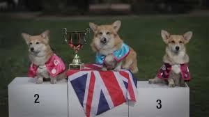 The Queen S Corgis by Royal Corgi Race For Royal Baby Youtube