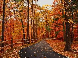 fall autumn 23 best fall scenes images on pinterest autumn leaves fall