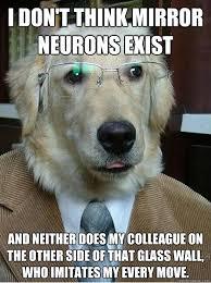 Mirror Meme - pix for dog in mirror meme