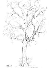 emg zine dryads and trees drawing tutorials drawing art