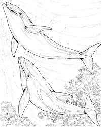 dolphin coloring pages free print 05691