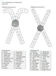 all worksheets genetics worksheets printable worksheets guide
