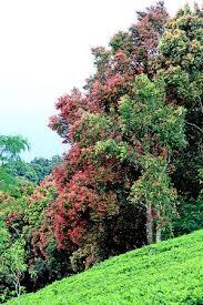 Teh Walini agrowisata gunung kebun teh walini foto di agrowisata gunung