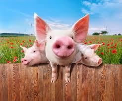 animali da cortile definizione la detenzione domestica di animali non convenzionali
