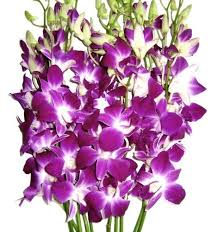 purple orchids fresh flowers purple dendrobium orchids fresh cut
