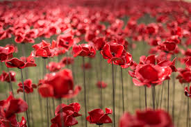poppies wave and weeping window 14 18 now