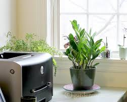 plant on desk indoor plant ideas the zz plant