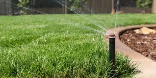 grass that doesn u0027t need water could keep california green