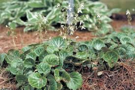 Sweet Flag Herb How To Create A Terrarium Hgtv