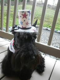 affenpinscher reviews photos scottish terrier and dog news page 8
