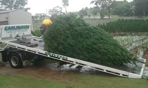How Much Are Real Christmas Trees - best prices for perfectly shaped real christmas trees in sydney