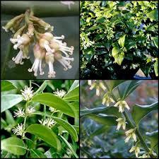 australian native shade plants plant inspirations plant nursery sales online delivered