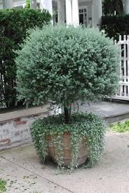 balkon bewã sserungssystem wohnzimmerz topfpflanzen balkon with bewã sserungssysteme